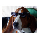 Este perro de caza es un kool kat tarjetas postales
