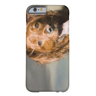 Este perro es perro perdiguero de oro de la parte funda para iPhone 6 barely there