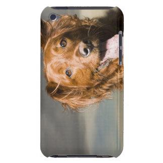Este perro es perro perdiguero de oro de la parte iPod Case-Mate protector