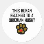Este ser humano pertenece a un husky siberiano etiquetas