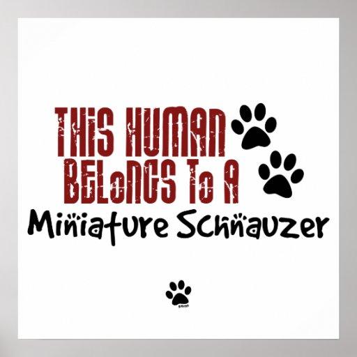 Este ser humano pertenece a un Schnauzer miniatura Impresiones