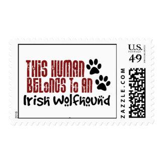 Este ser humano pertenece a un Wolfhound irlandés Envio