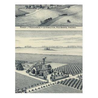 Estella Blanca Vineyard, California Postcard