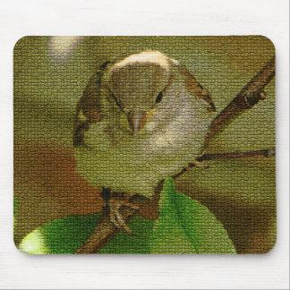 Estera del ratón de Sparow Alfombrillas De Raton