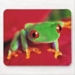 Estera verde clara del ratón de la rana tapete de raton