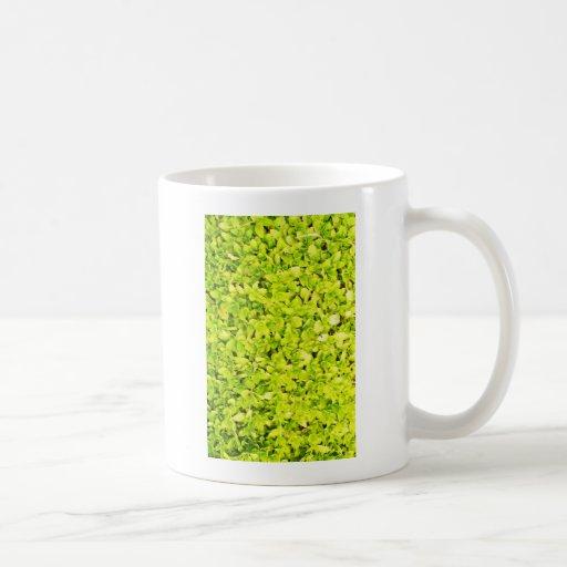 Estilo de la moda de las formas del extracto de la taza básica blanca