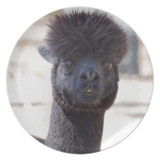 Estilo de pelo salvaje y loco de la alpaca platos de comidas