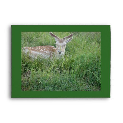 Estimado Deer Sobre