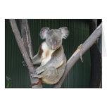 Estímulo Notecard de la koala Tarjeta De Felicitación