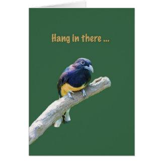 Estímulo, pájaro que cuelga en tarjeta del miembro