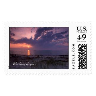 Estímulo - sello de la bahía de Chesapeake