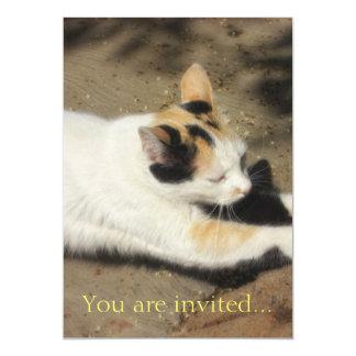 Estiramiento no muy amistoso del gato invitación 12,7 x 17,8 cm