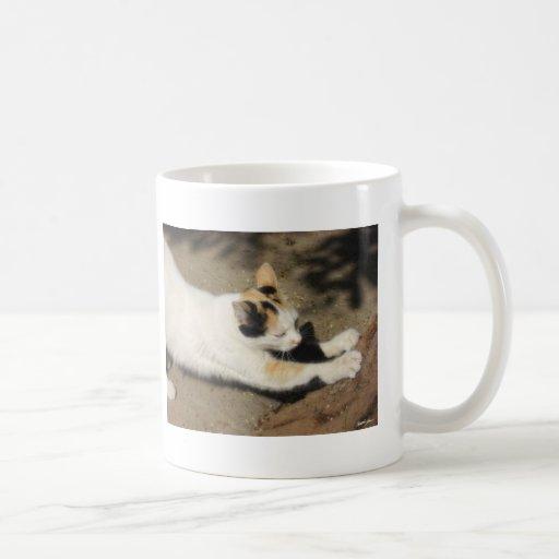 Estiramiento no muy amistoso del gato taza