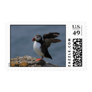 Estirar franqueo del frailecillo timbre postal