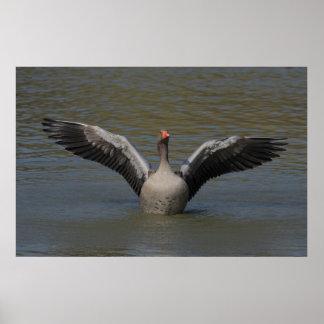 Estirar la impresión del ganso silvestre poster