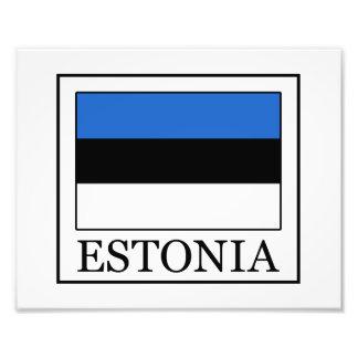 Estonia Cojinete