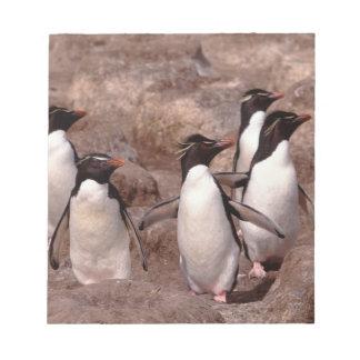 Estos cinco pingüinos de Rockhopper (Eudyptes Blocs De Papel