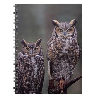 Estos grandes búhos de cuernos (virginianus del bu note book