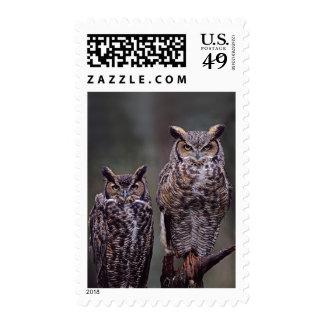 Estos grandes búhos de cuernos (virginianus del sello postal