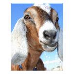 Estrella 1.jpg de la cabra membretes personalizados