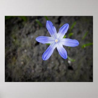 Estrella azul póster