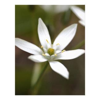 Estrella-de-Belén (umbellatum del Ornithogalum) Membrete A Diseño
