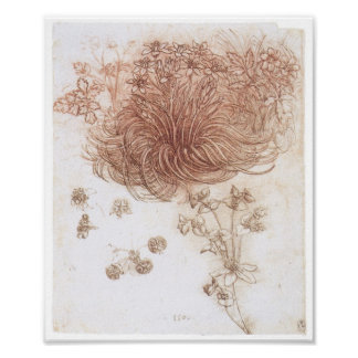Estrella de Belén y de otras plantas, da Vinci Póster