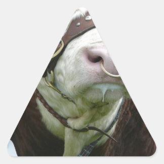 Estrella de la demostración pegatina triangular