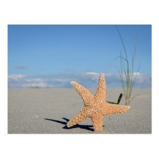 Estrella de lago a la playa postales