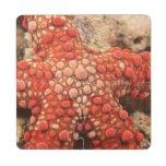 estrella de mar, buceo con escafandra en Tukang Be Posavasos De Puzzle