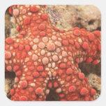 estrella de mar, buceo con escafandra en Tukang Pegatina Cuadrada