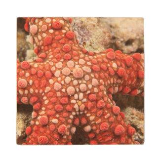 estrella de mar, buceo con escafandra en Tukang Posavasos De Arce