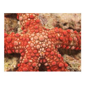 estrella de mar, buceo con escafandra en Tukang Postal