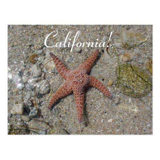 Estrella de mar de California Postal