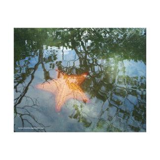 Estrella de Mar en La Ciénaga Impresión En Lienzo