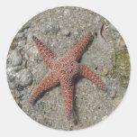 Estrella de mar pegatina redonda