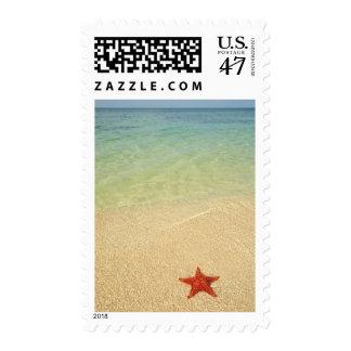 Estrella de mar roja del amortiguador el   sello postal
