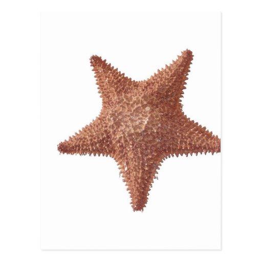 estrella de mar tarjetas postales