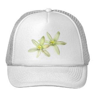 Estrella del gorra de Belén