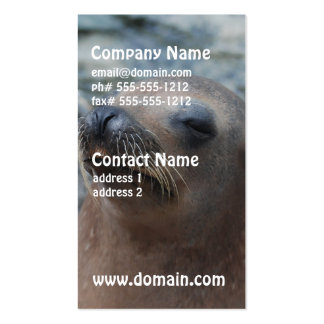 Estrella del león marino tarjeta de visita
