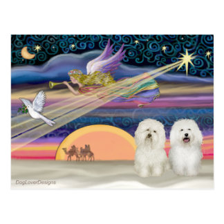 Estrella del navidad - boloñés (dos) postales