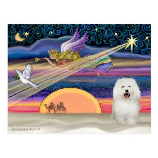 Estrella del navidad - boloñés postal