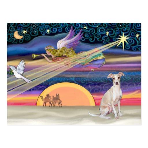 Estrella del navidad - galgo italiano 5 tarjetas postales
