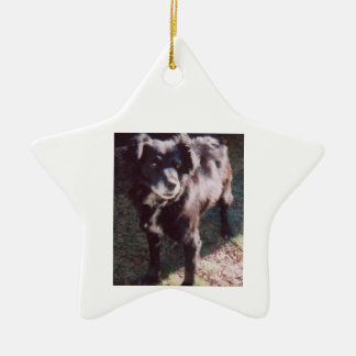 Estrella del ornamento de DNatureofDTrain Maxie Adornos De Navidad