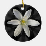 Estrella del ornamento del ~ de la flor de Belén Ornaments Para Arbol De Navidad