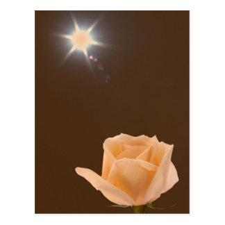 Estrella estallada sobre rosa tarjetas postales