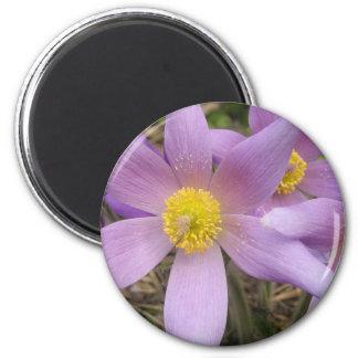 Estrella púrpura imán redondo 5 cm