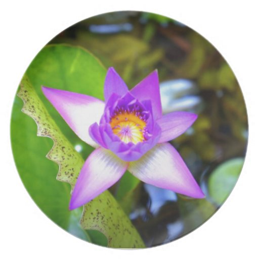 Estrella púrpura plato de cena