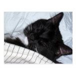 Estrella solitaria - siesta del gatito postales