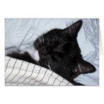 Estrella solitaria - siesta del gatito felicitaciones